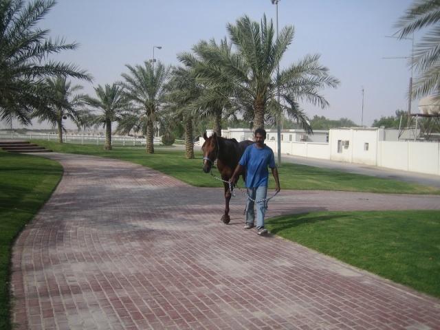 qatar_rec3_640